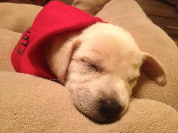 Dobby Sleeping