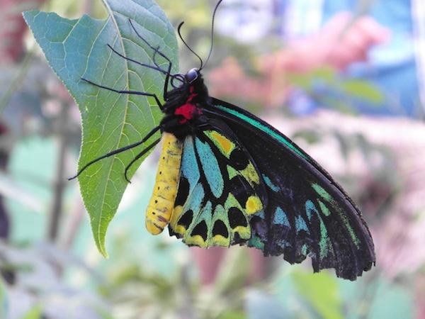 WW - Butterfly Zoo, Rhode Island