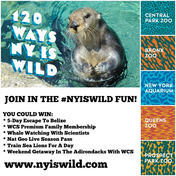 #NYisWild At NYC Zoos And The Aquarium