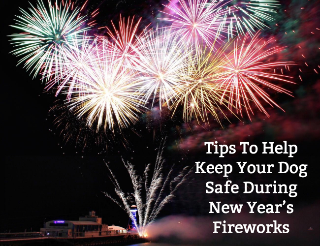Tips To Help Keep Your Dog Safe During New Year's Fireworks