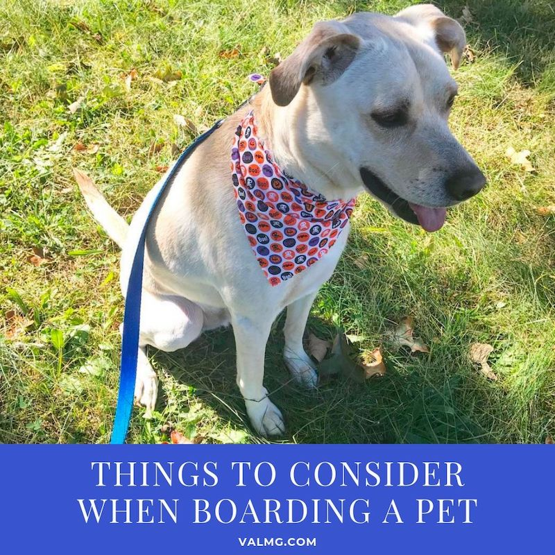 Things To Consider When Boarding A Pet